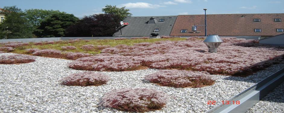 Izdelava zelenih streh z izolacijo
