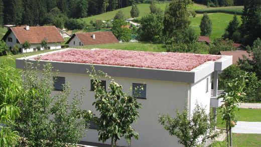 ozelenitev terase