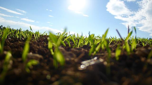 Zelena streha potrebuje prave rastline